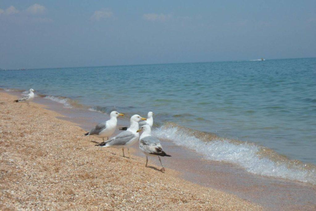 море. чайки